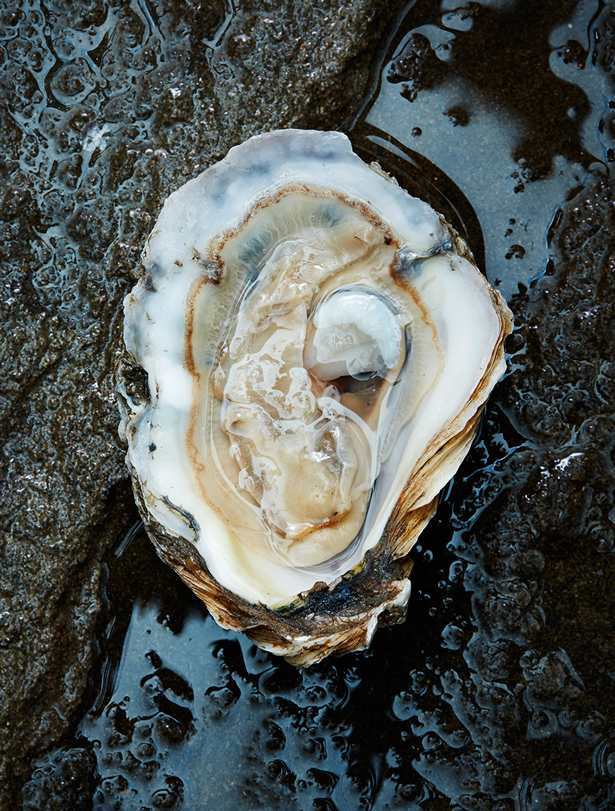 150427_WholeFoods_Oysters_758-1